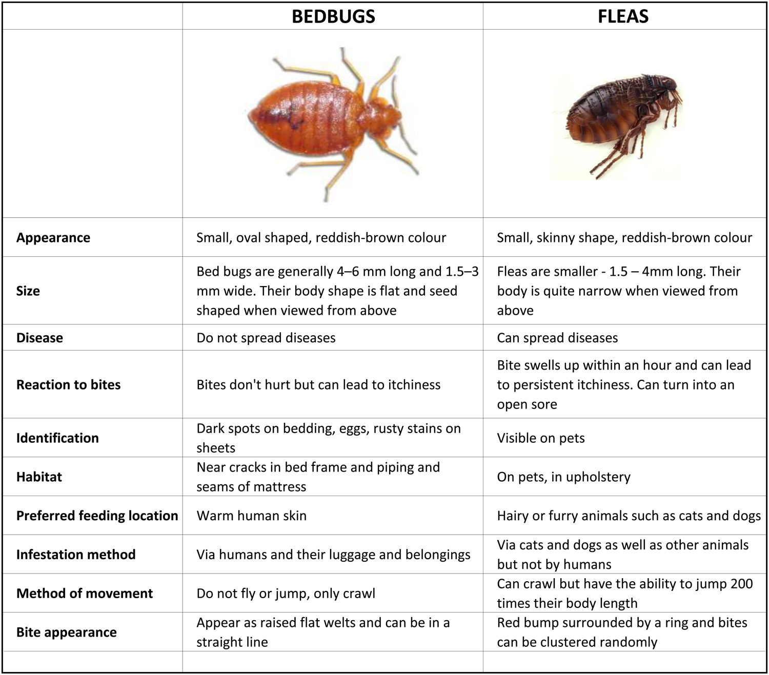 Bed Bugs How To Get Rid Of Bed Bugs Bed Bugs In Perth