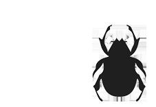 Lawn Beetles