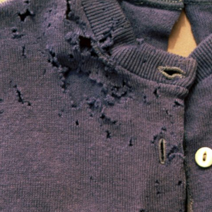 Damage to clothing from Carpet Beetles