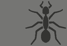 icon-ant