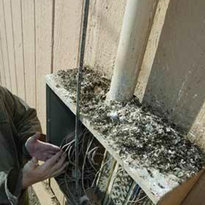 Electrical switchboard damaged by bird droppings