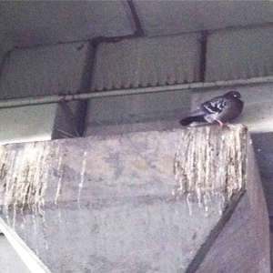 Bird nesting & droppings in a warehouse