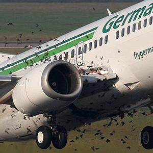 Birds cause major damage to aviation