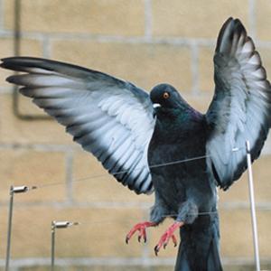 Bird post & wire system